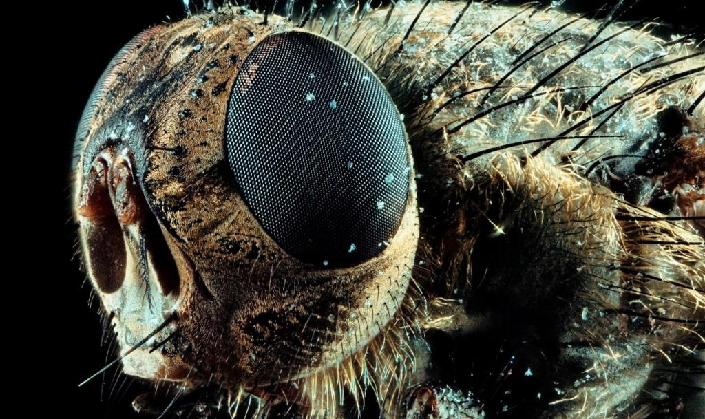 macro fly microscope lens